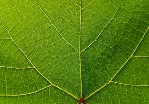 CMU demonstrates nanoscale technology that causes plants to absorb nutrients with nearly 100% efficiency